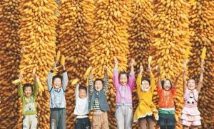 中國大陸糧食安全政策除了大豆被轉基因攻佔外,其他主要糧食仍在全力防止與對抗轉基因化。