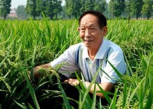 袁隆平與他的雜交水稻