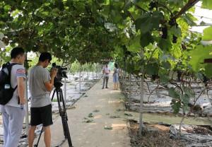 大陸媒體也開始關注這一新興行業,圖為成都電視台採訪農業職業經理人曾正平。