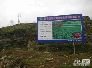 塘約村農業合作社的蔬菜種植基地。