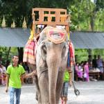 我們因探訪大象得到那麼多快樂,然而大象卻因為人類的貪婪受痛苦。(攝影/林孝永)