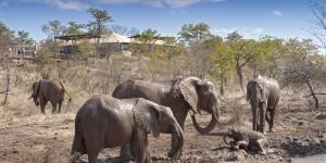 在志願者營地附近活動的象群。