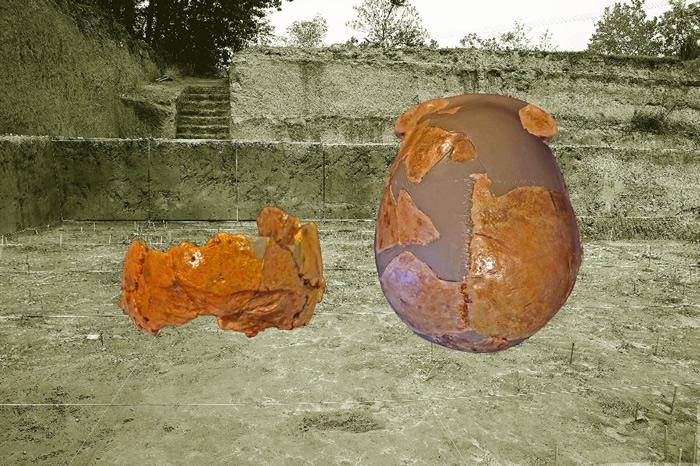 許昌人一號(右)和許昌人二號(左)頭骨化石。