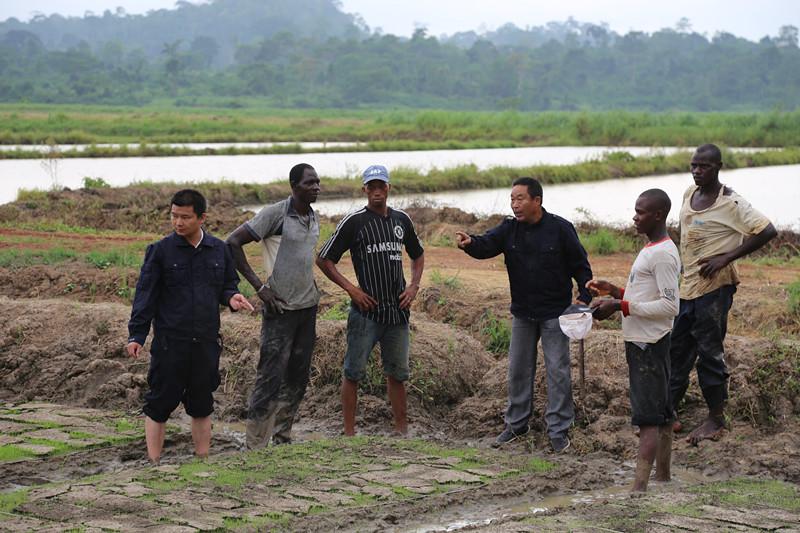 在距象牙海岸經濟首都阿比讓160公里的「格格杜墾區」,大陸水稻技術農藝師向象牙海岸稻農講解水稻種植技術。(新華社)